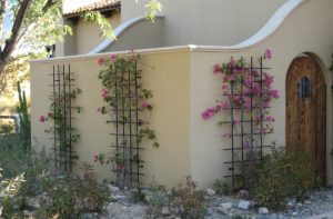 steel post trellis