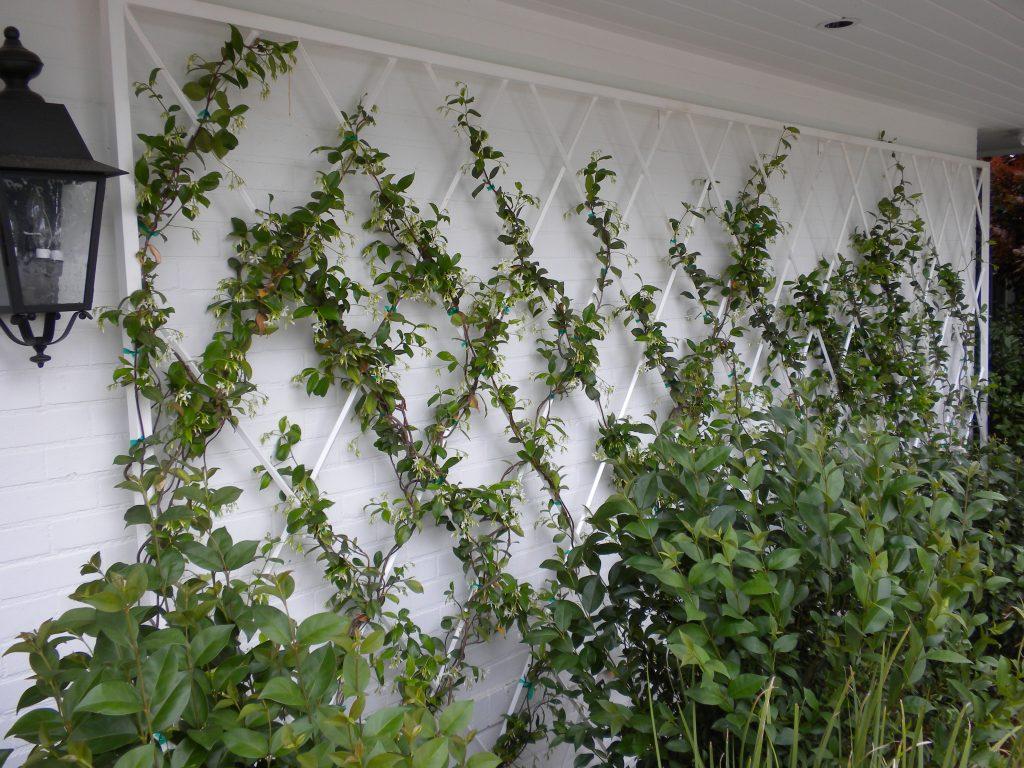 Gallery – Arizona Trellis – Gardening Trellises