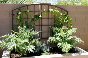Custom Steel Trellis