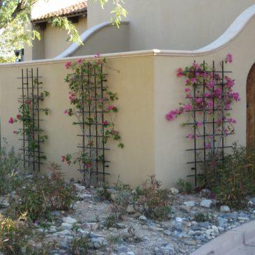 trellis softens exterior wall