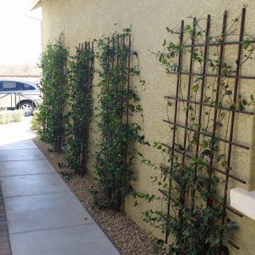 trellis walkway wall