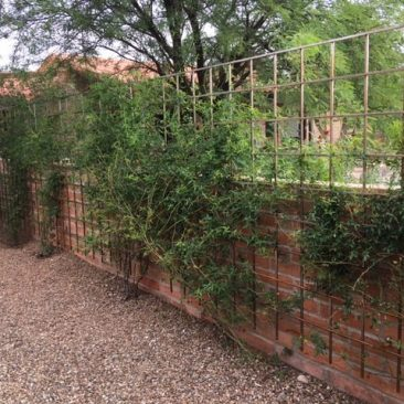 trellis extends above wall